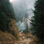 лес_2